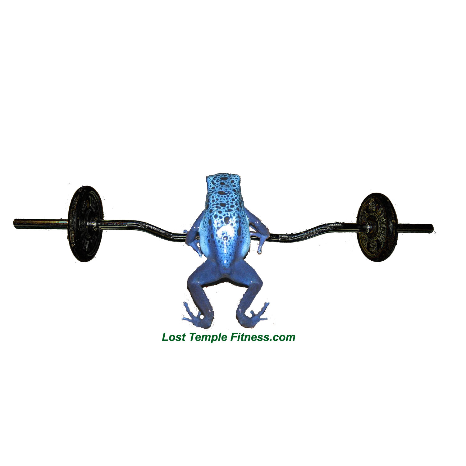 frog lifting weights, blue