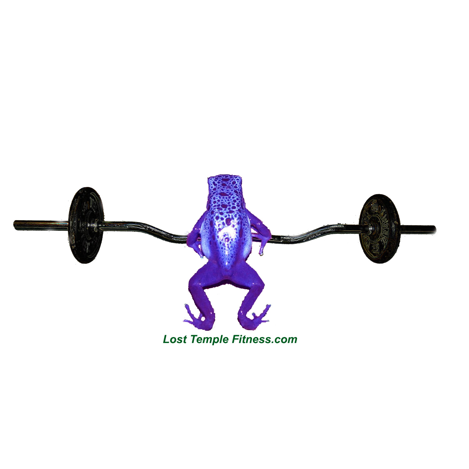 frog lifting weights, purple